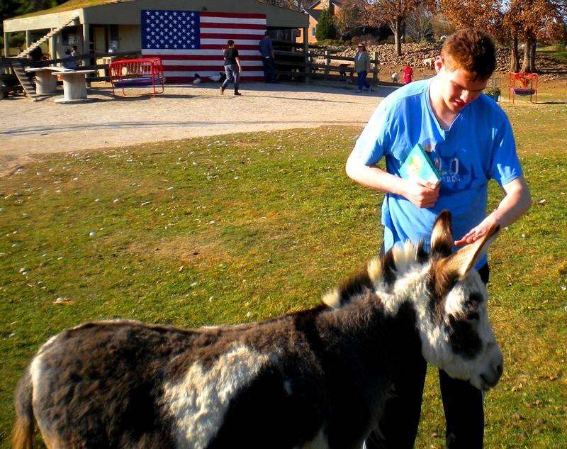 Ben petting at the petting farm