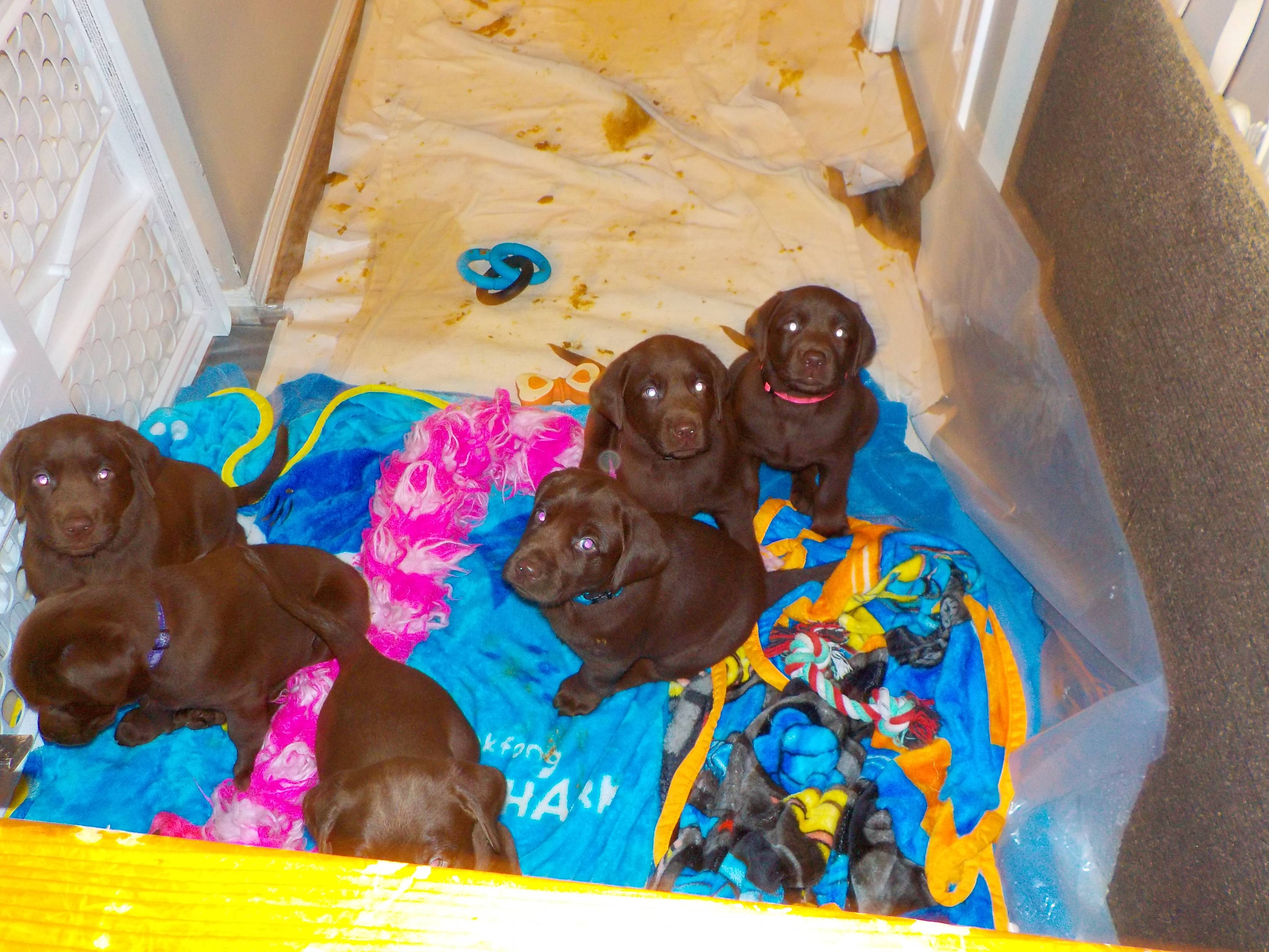 Good Morning Puppies. Did you make this mess?