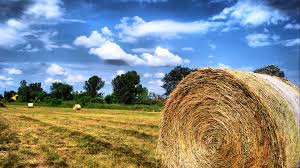 Large Round Straw Bales