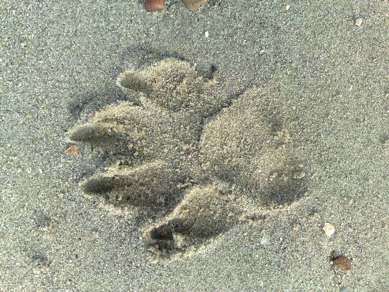 Is that a lion's paw print...?