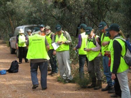 Malleefowl Mound Line Search 2011