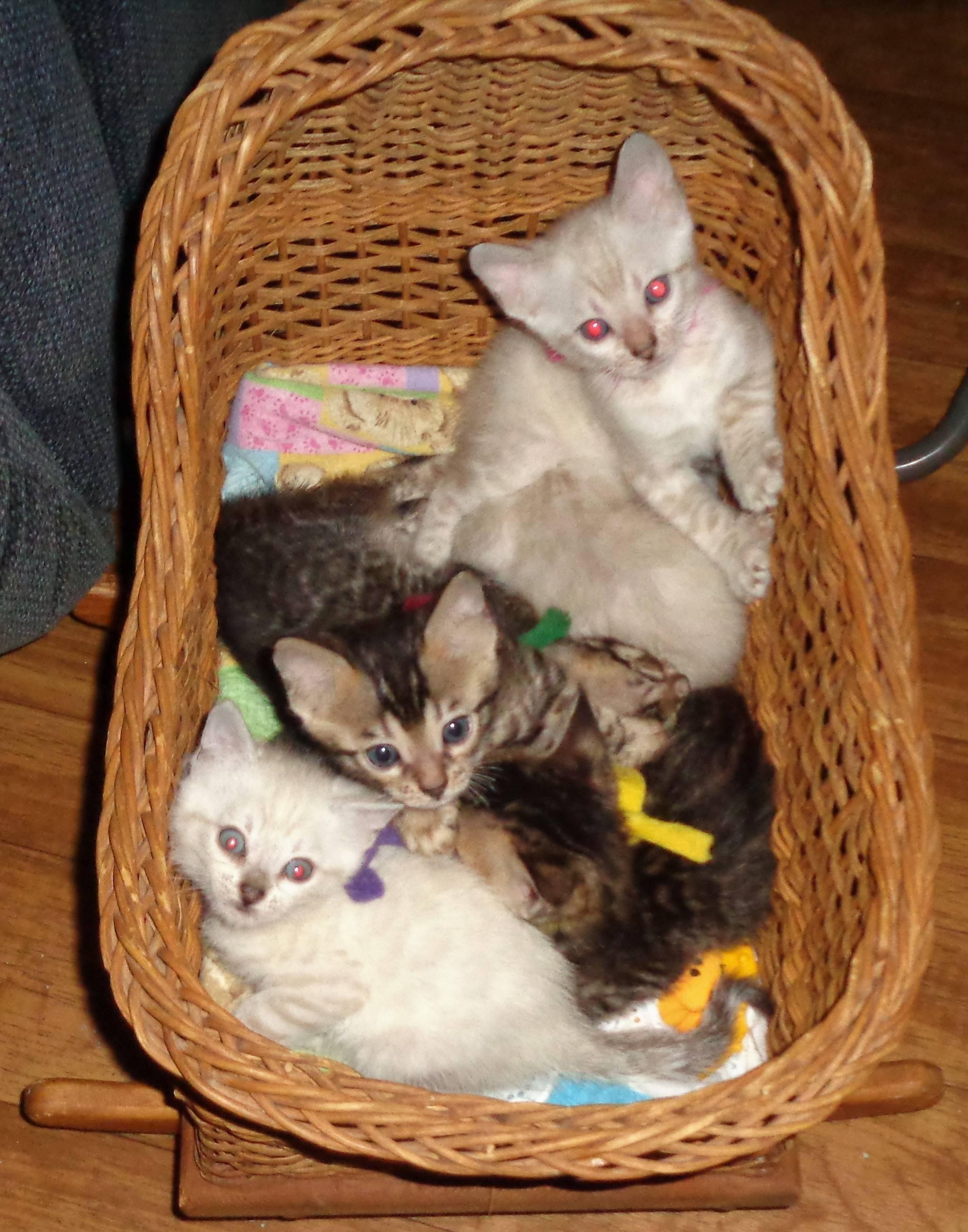 PRECIOUS KITTENS ENJOYING THEIR CRADLE...