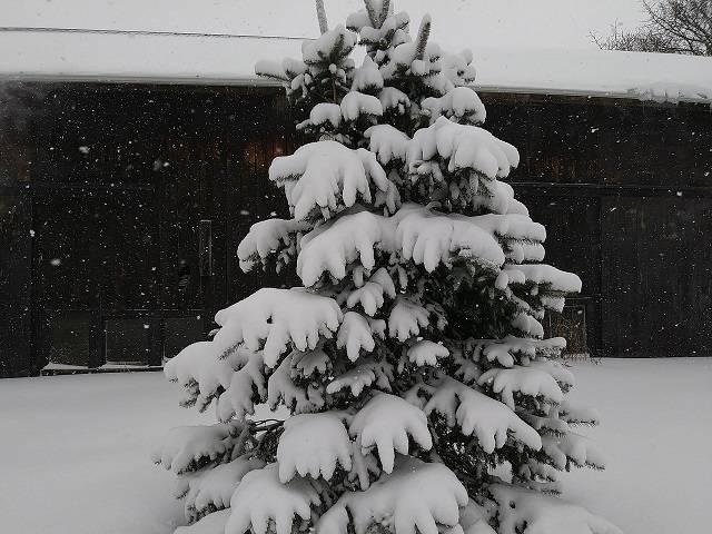 The Night Tree In Winter