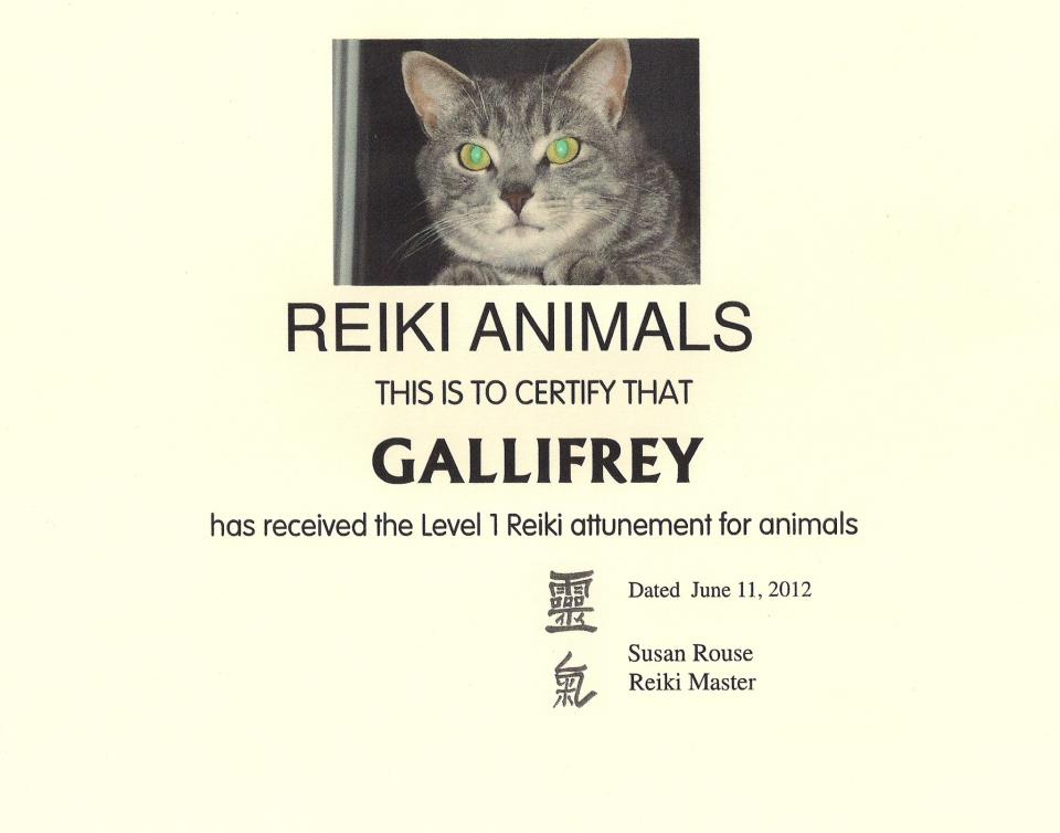 Gallifrey the Reiki Cat