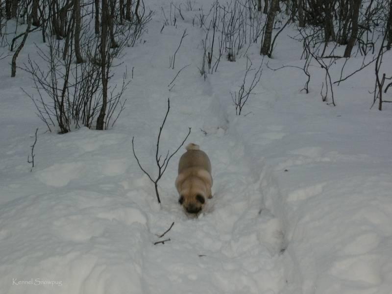 På tur i skogen på Tennes