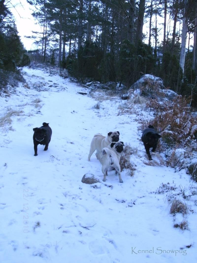 Alle hundene på tur