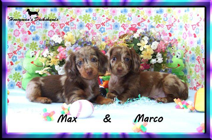 Max & Marco