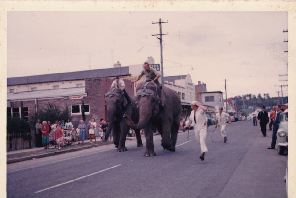 Elephant Race in Orient Street