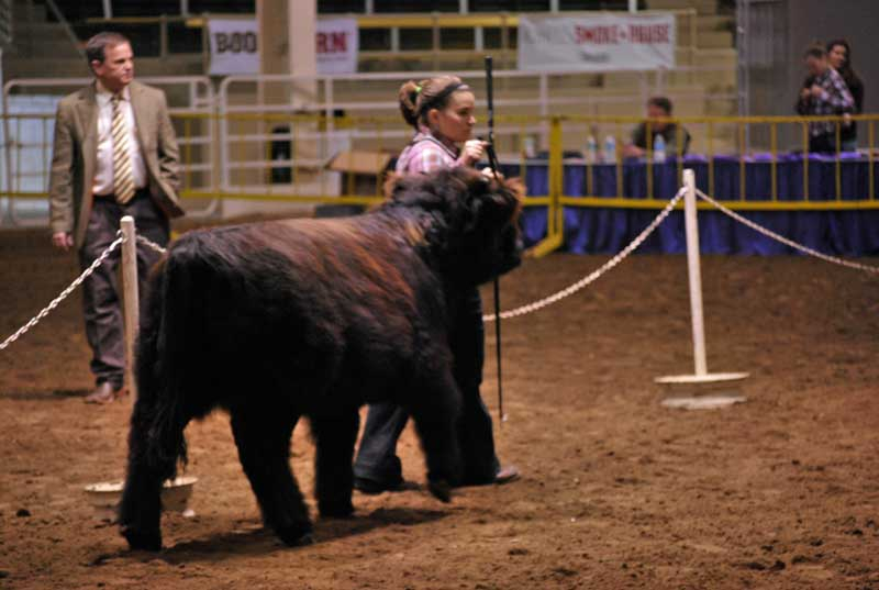 March Junior Heifer Calves