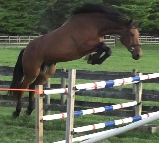 5 year old Free Jumping