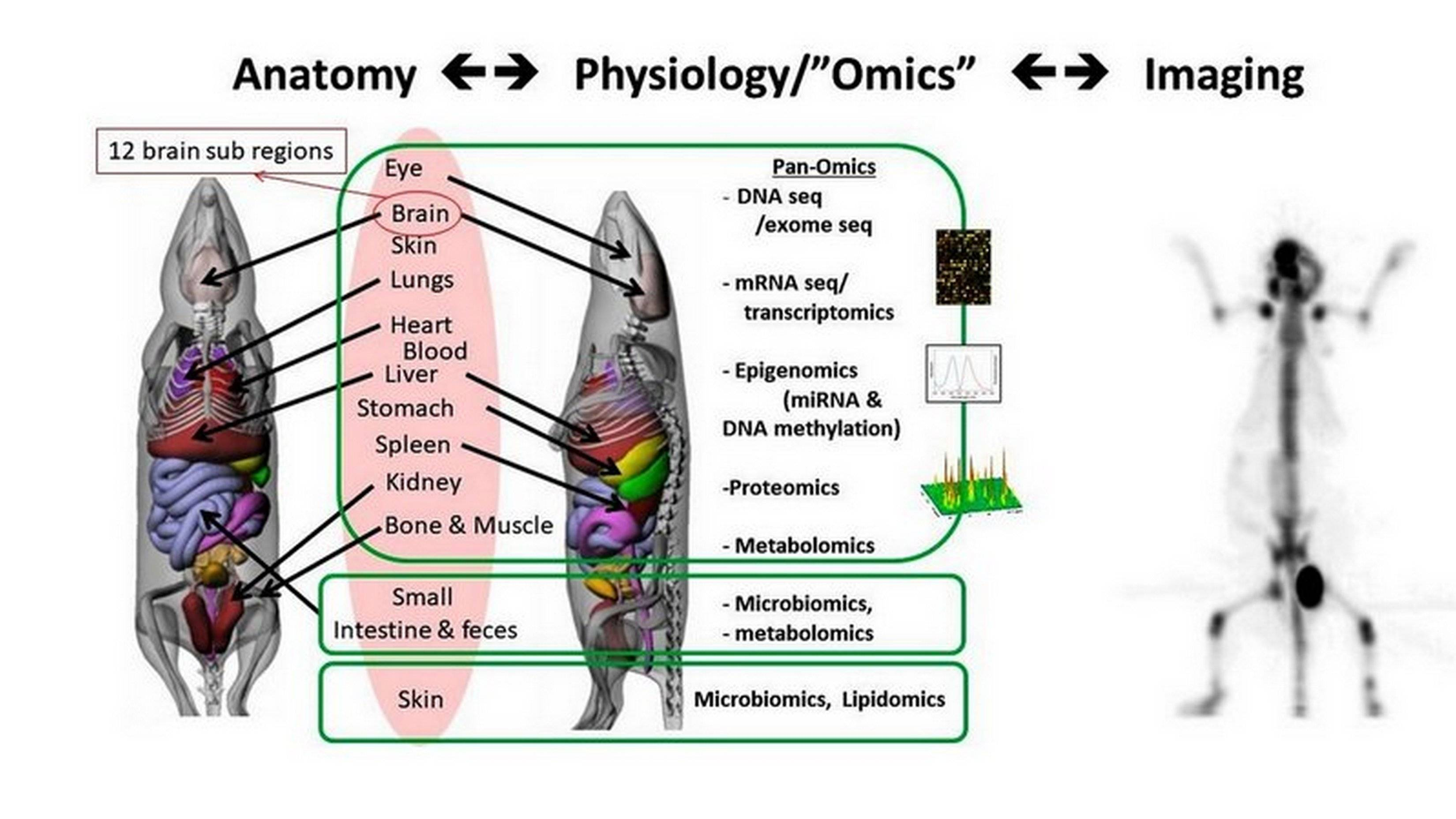 Imaging and systems pharmacology