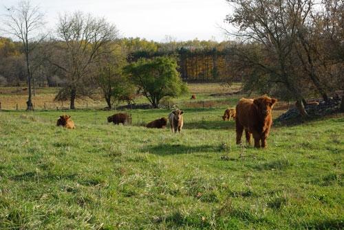 Babies on pasture