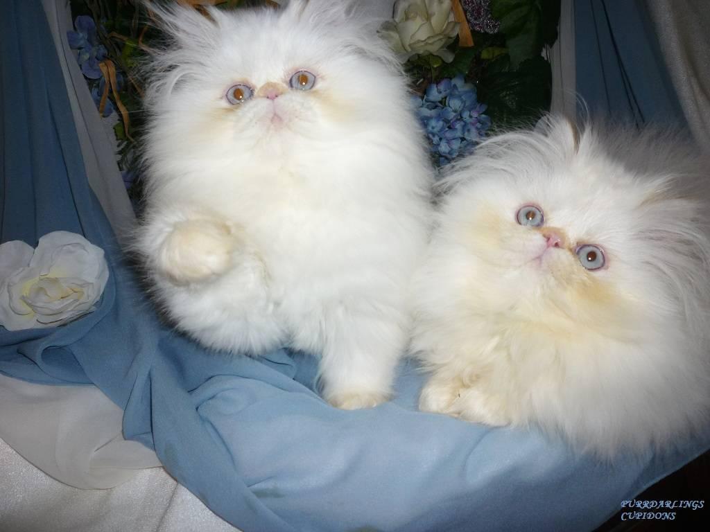 PREVIOUS KITTENS