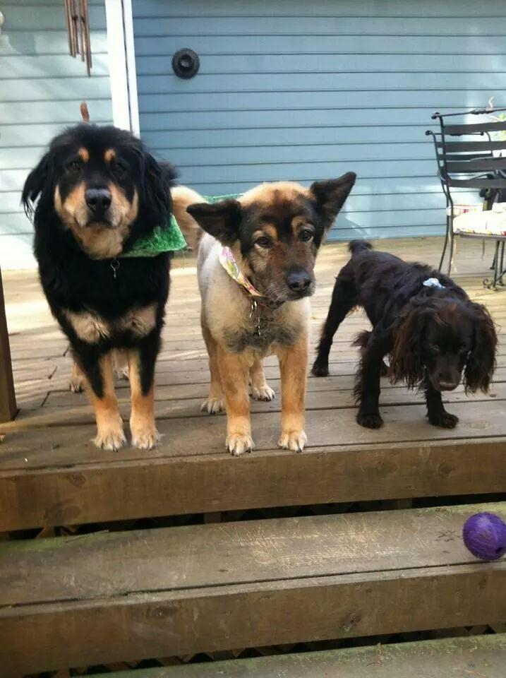 Finley, Emma, and Maggie