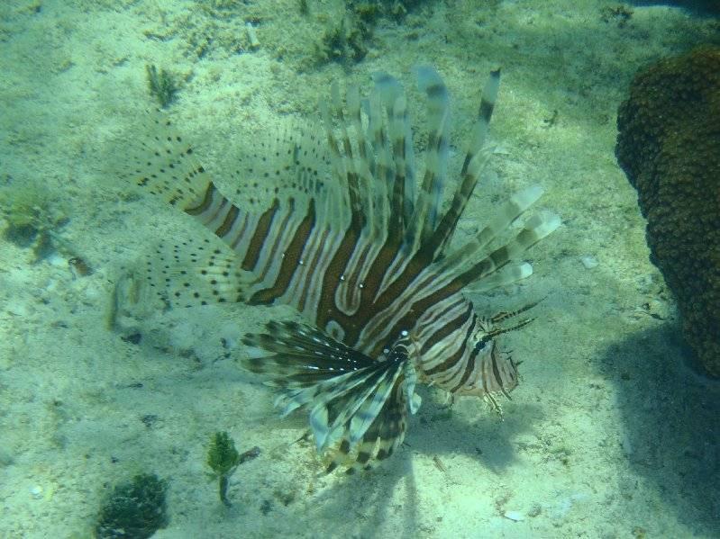 Lionfish at Matt Lowes Cay