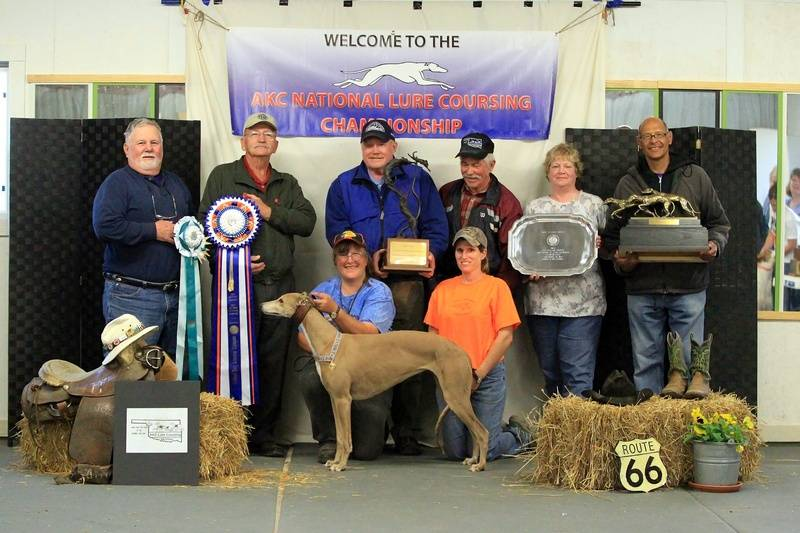 2013 AKC National Field Trial Champion.