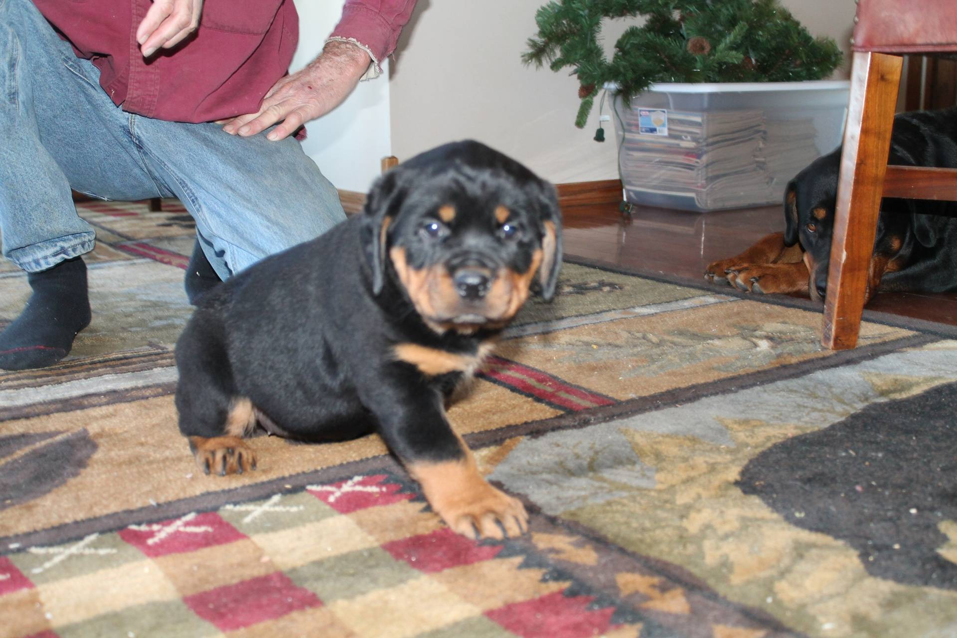 MaCoy Puppy