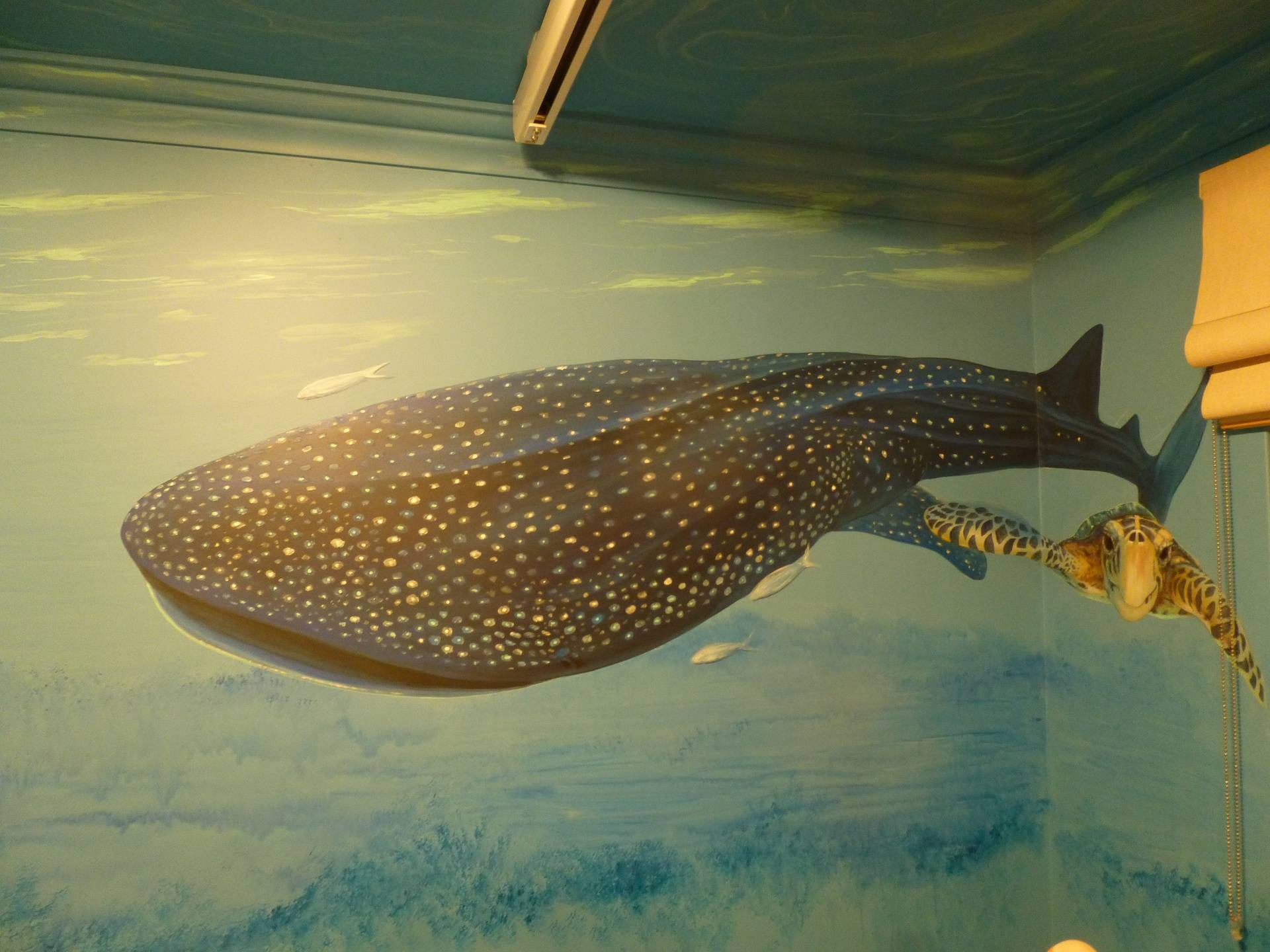 JACK'S ROOM B   the whale shark  WA