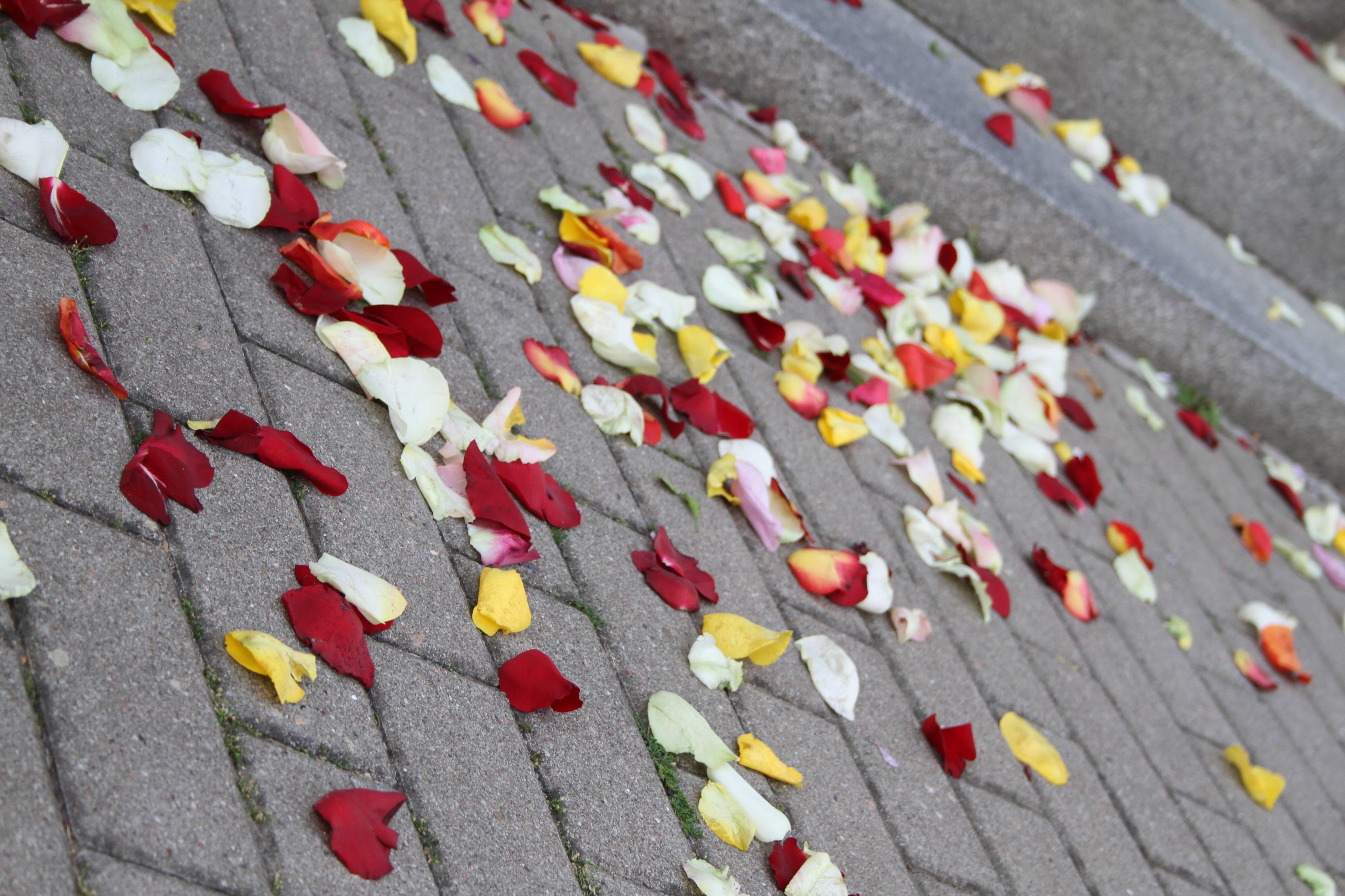 Auf Rosenblätter schweben