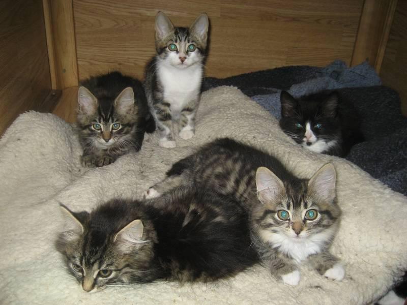 Poppy's kittens