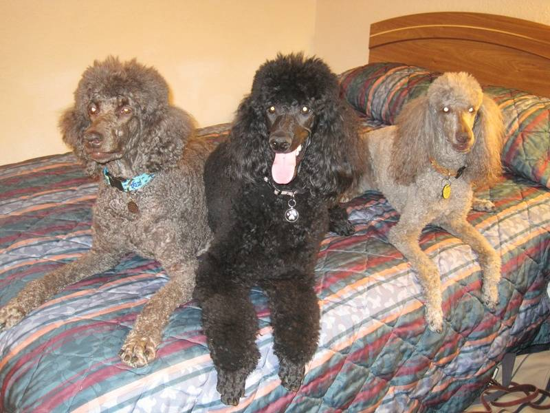 A weekend trip with the girls!  (L to R, Penny, Pepper, Amber)  11/14/09.