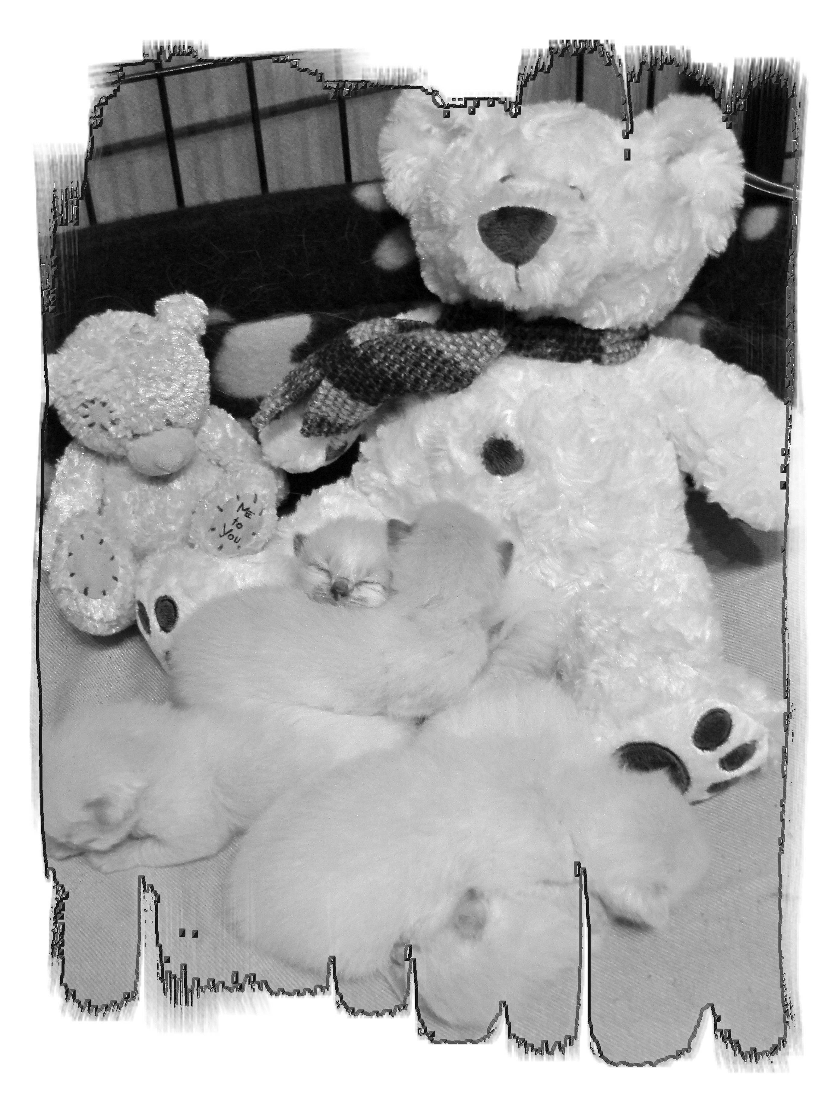 Big Ted & Little Ted  looking after the babies