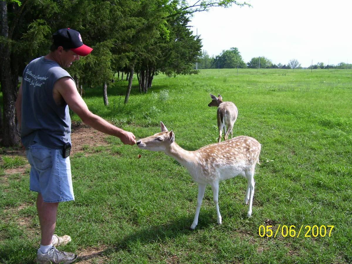 Rusty & the deer