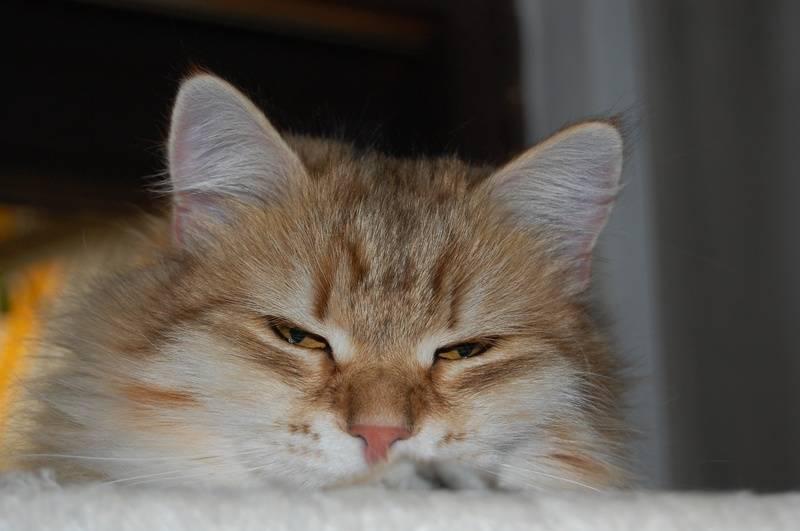En av ungkattene til Cristina!