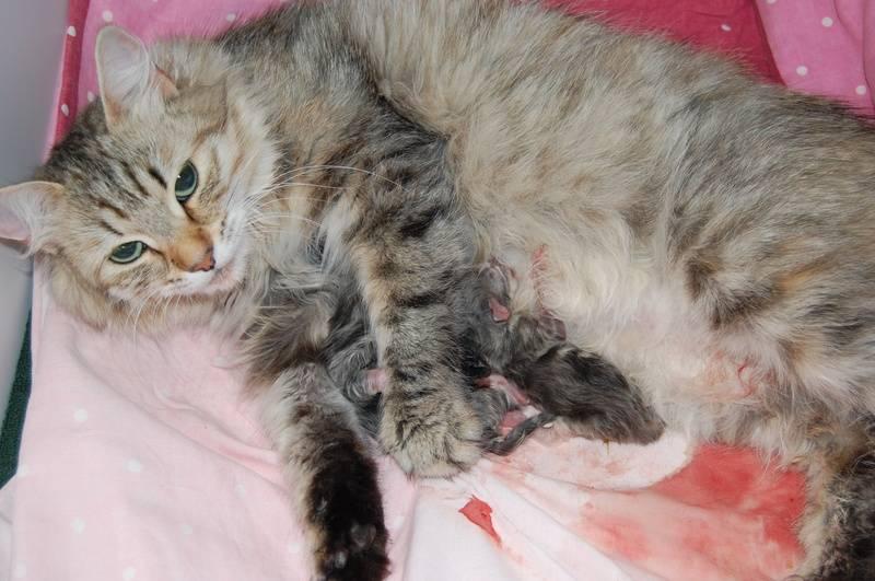 Veldig fornøyd mor, som maler mens hun dier de små.