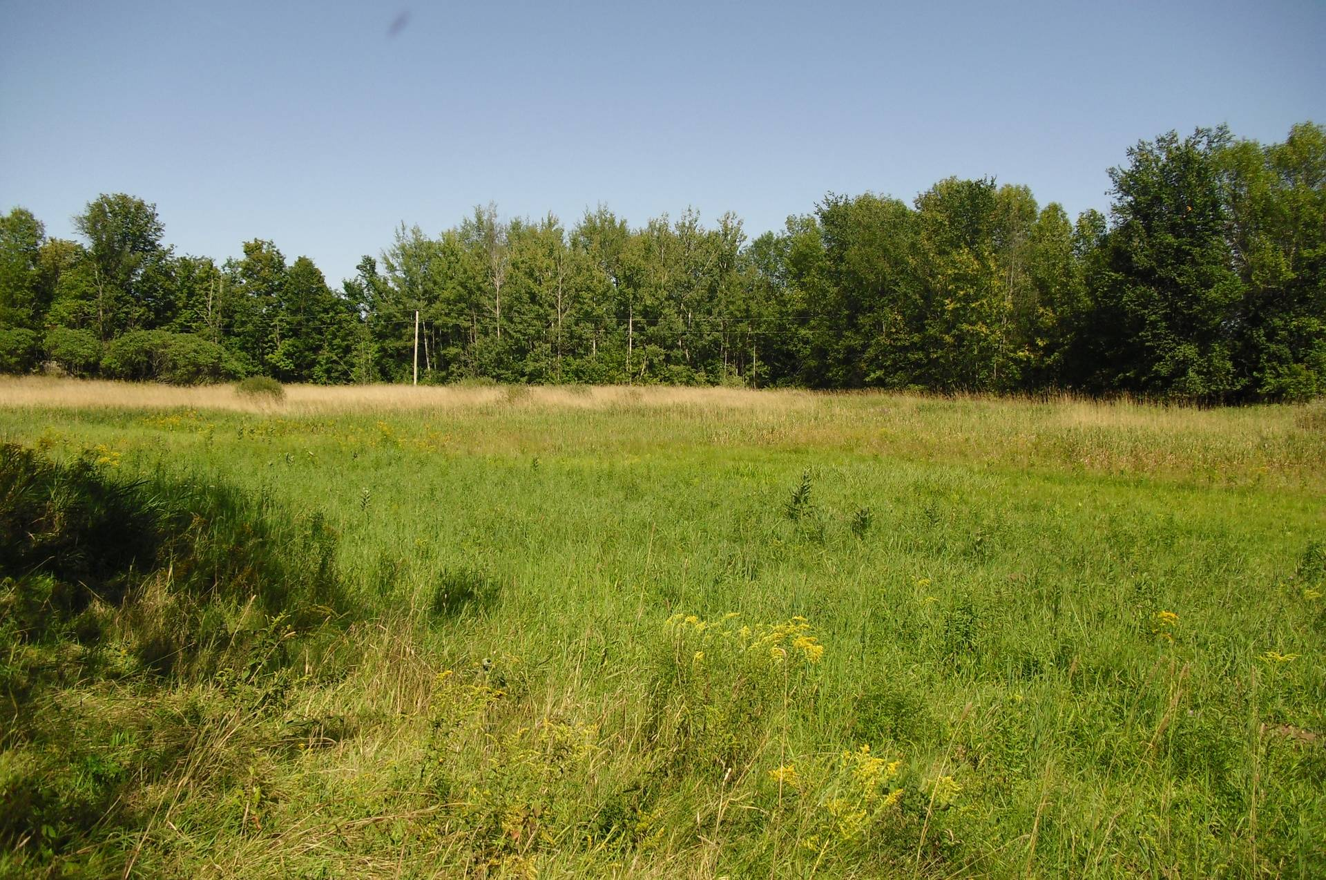 One of our Pastures