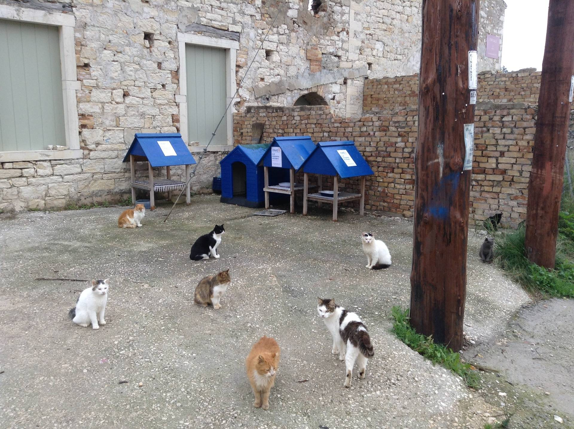 Feeding stations in Loggos