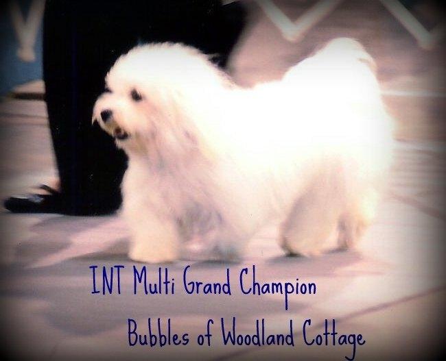 Multi Grand Champion Bubbles of Woodland Cottage