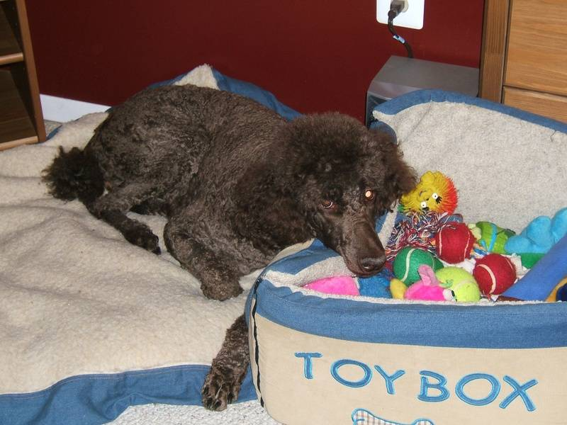 Penny loves her toy box! 10/7/07.