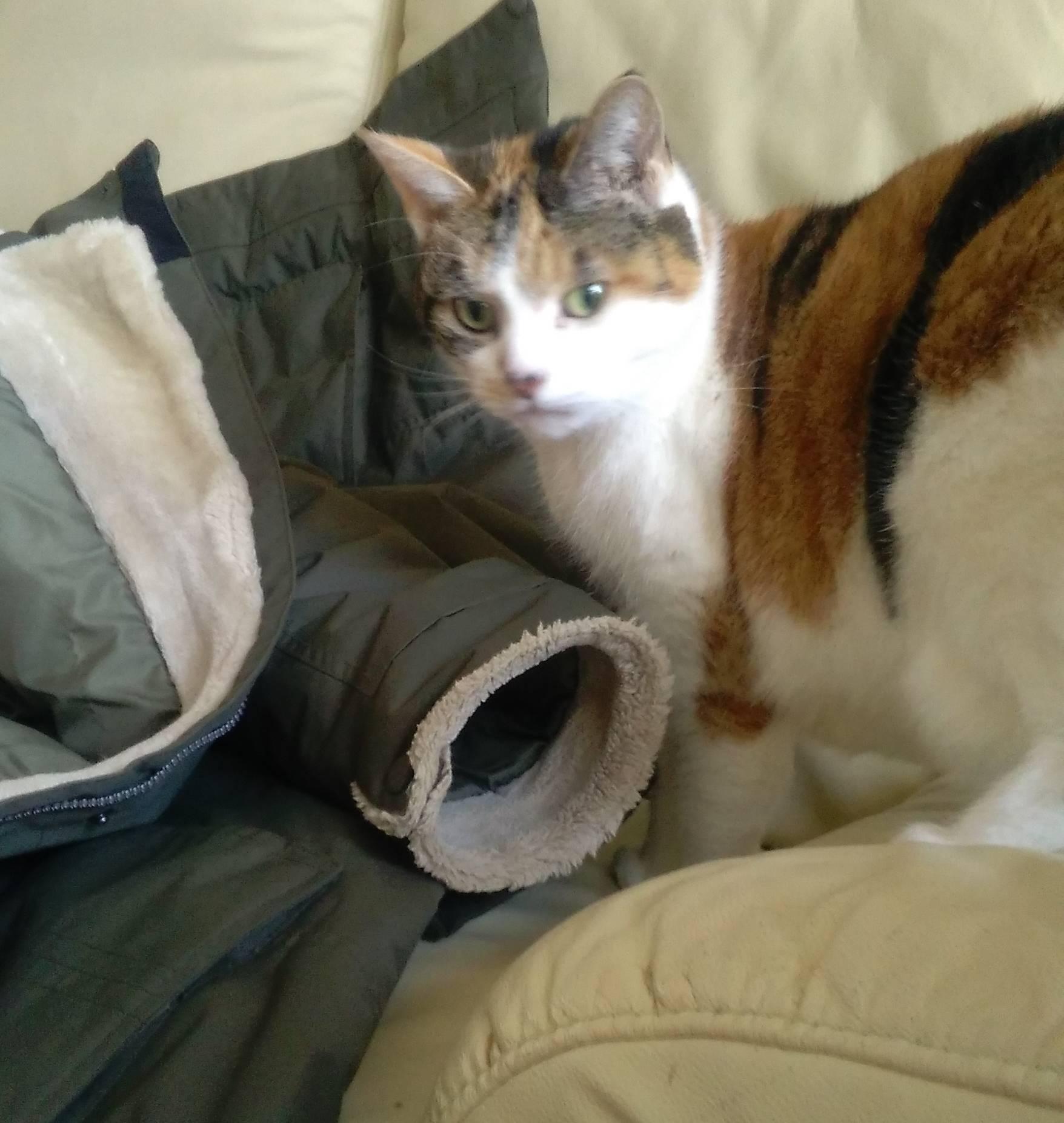 Caught sniffing Sarah's coat