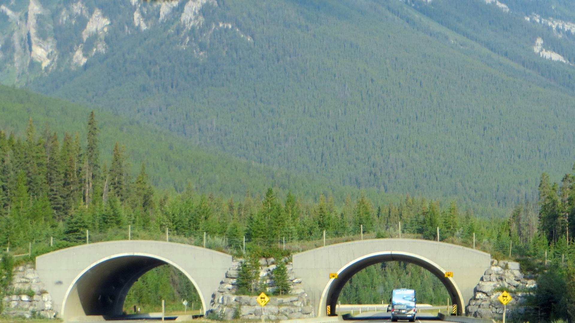 Wildlife bridge in Banff National Park