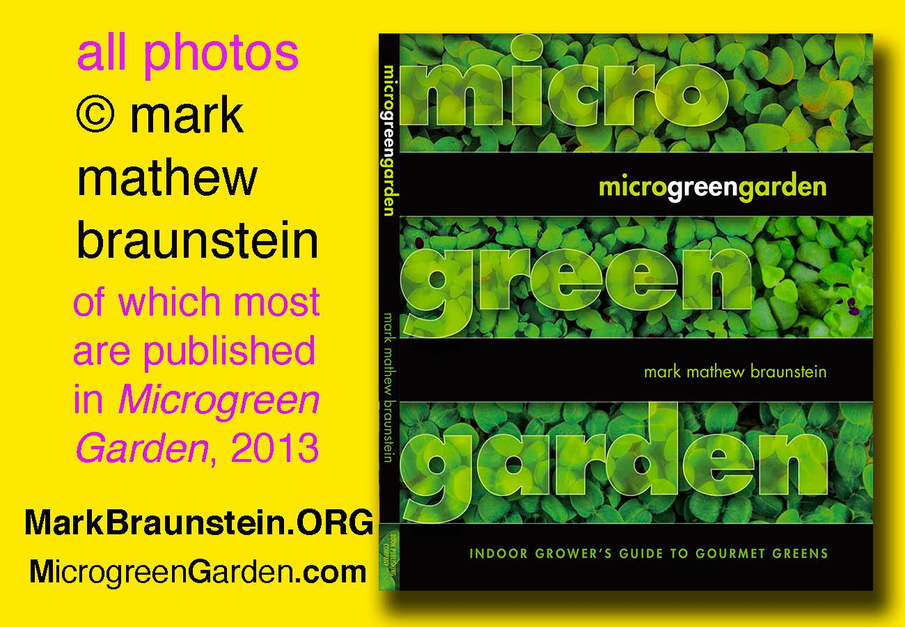 MICROGREEN GARDEN by Mark Mathew Braunstein