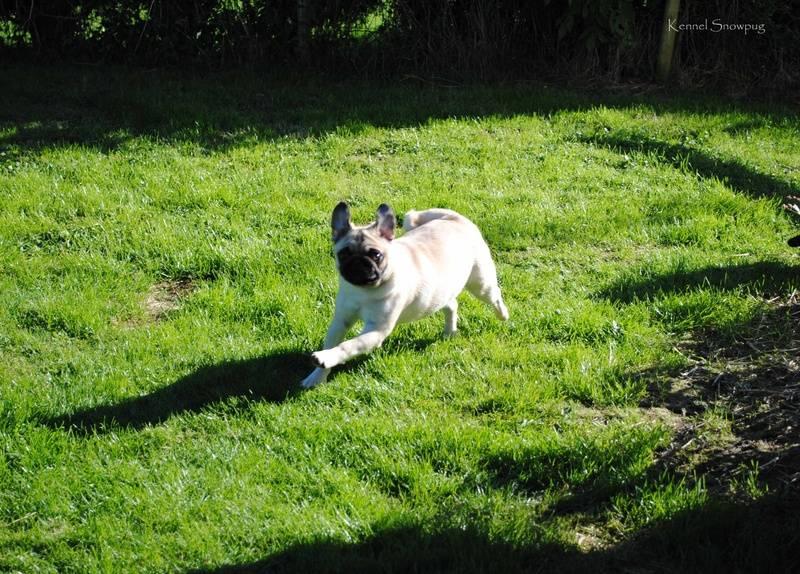 Ingeborg with flying ears