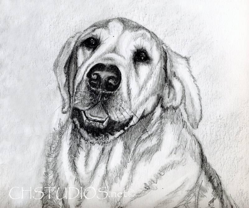 Rock Pet Portrait Commission