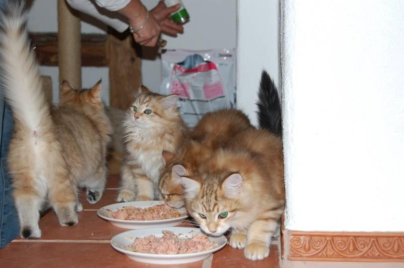 Tre av kattungene i kullet... 28.10.09