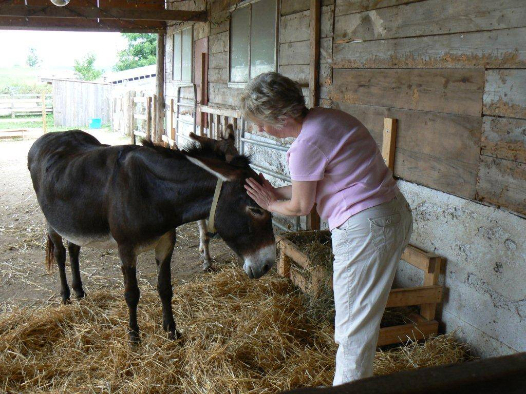 Equine Reiki with Patsy the donkey at PrimRose Donkey Sanctuary