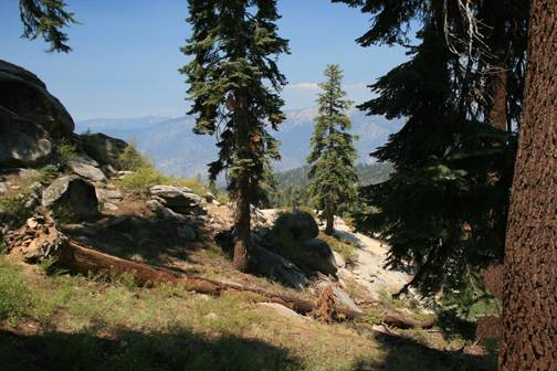Between the Repeater Site & Lookout Tower