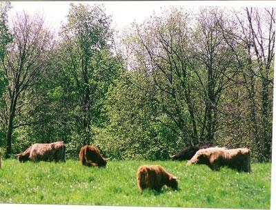 Orchard pasture