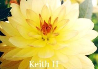 Keith H WL Lt Bl Y/R