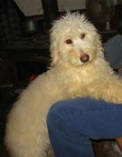 Lola 9 months