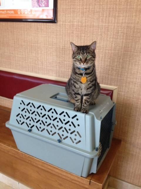Crate Inspector