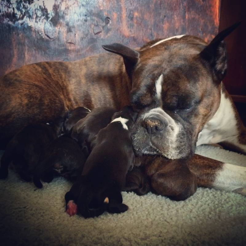 Jackie with Riddick litter