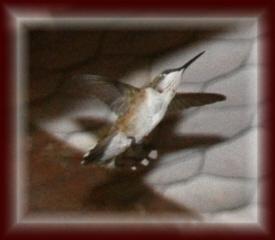 Bird in Garage