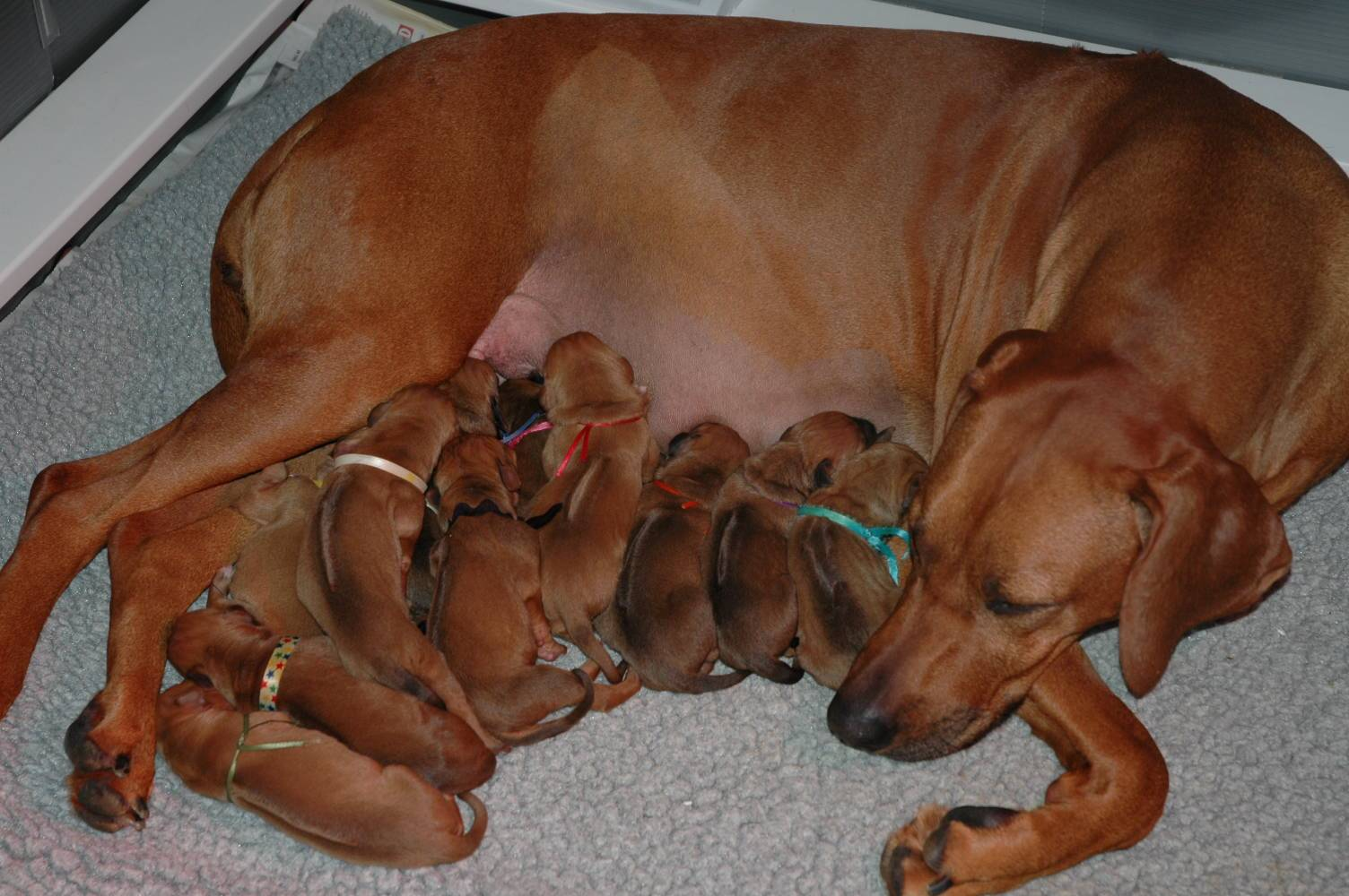 Puppy pile and momma