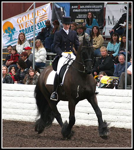 Morjn at Equine Affaire
