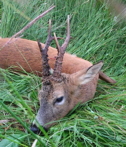 buck 08